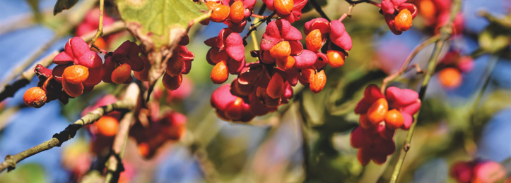Skovplanter